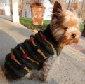 <h5>D001 CHRISTMAS TREE DOGGIE SWEATER</h5>