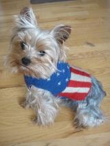 <h5>D003 American Flag</h5>