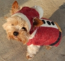 <h5>D001 SANTA DOGGIE SWEATER</h5>